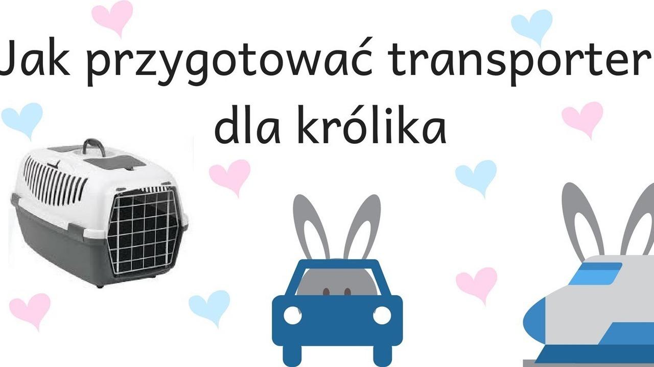 2d00d25ac3b87f Jak przygotować transporter dla królika - wideo w cda.pl