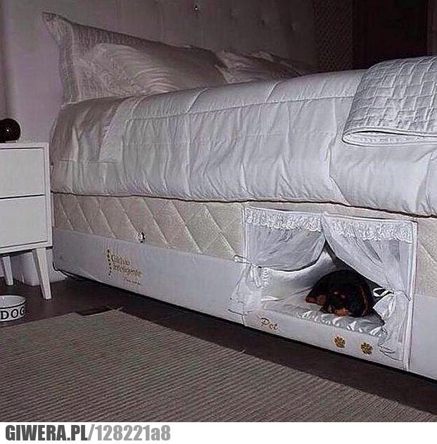 łóżko Dla Psa Giwerapl