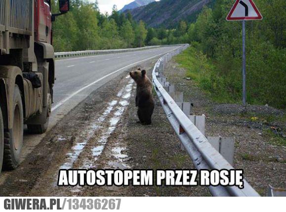 autostop,rosja,miś,niedźwiedź