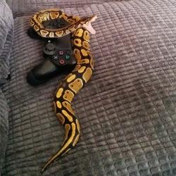 Chciał pograć na konsoli