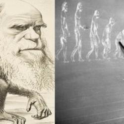 Ewolucja to żałosna farsa