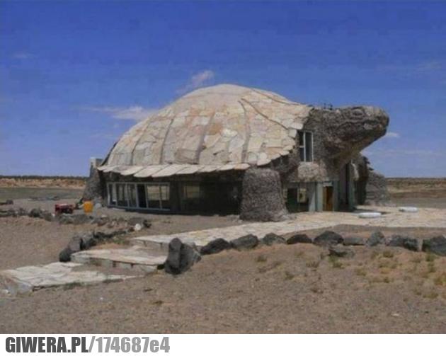 Dom,żółw,inżynier