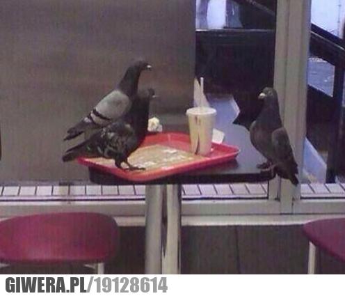 Gołąb na rozmowie kwalifikacyjnej