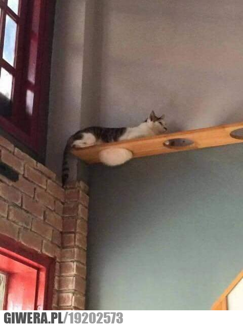 Koci brzuszek