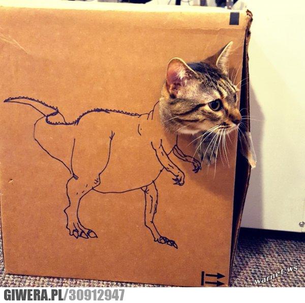 kotozaur,śmieszny kotek