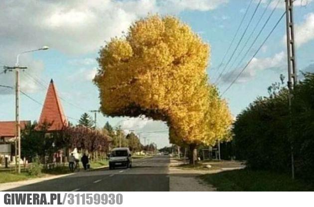 drzewo,matka natura
