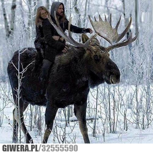 Uber w Finlandii