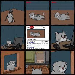 Fenomen kota w internecie