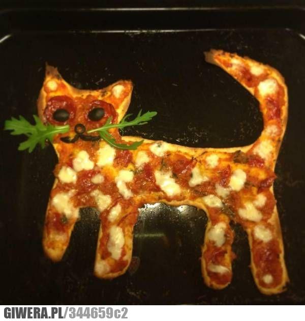 Śmieszny kotek,pizza