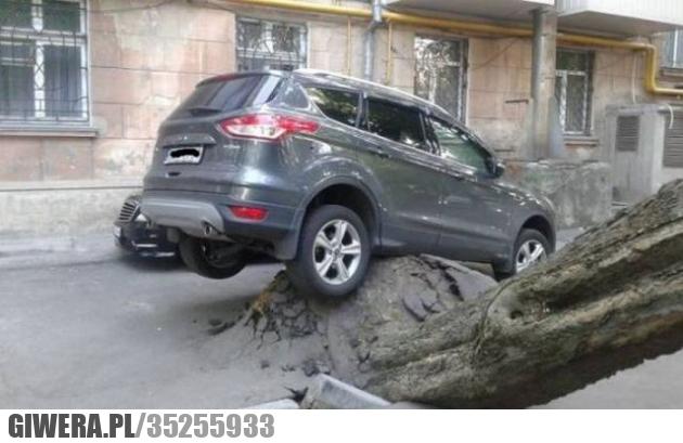 pech,parkowanie,drzewo