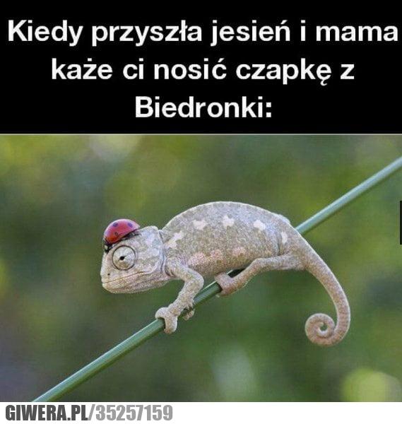 heheszki,biedronka