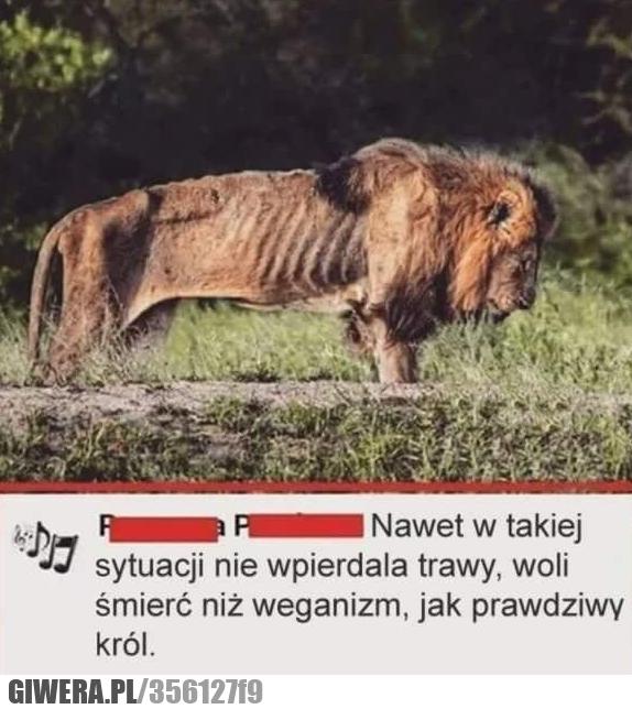 Lew,weganizm