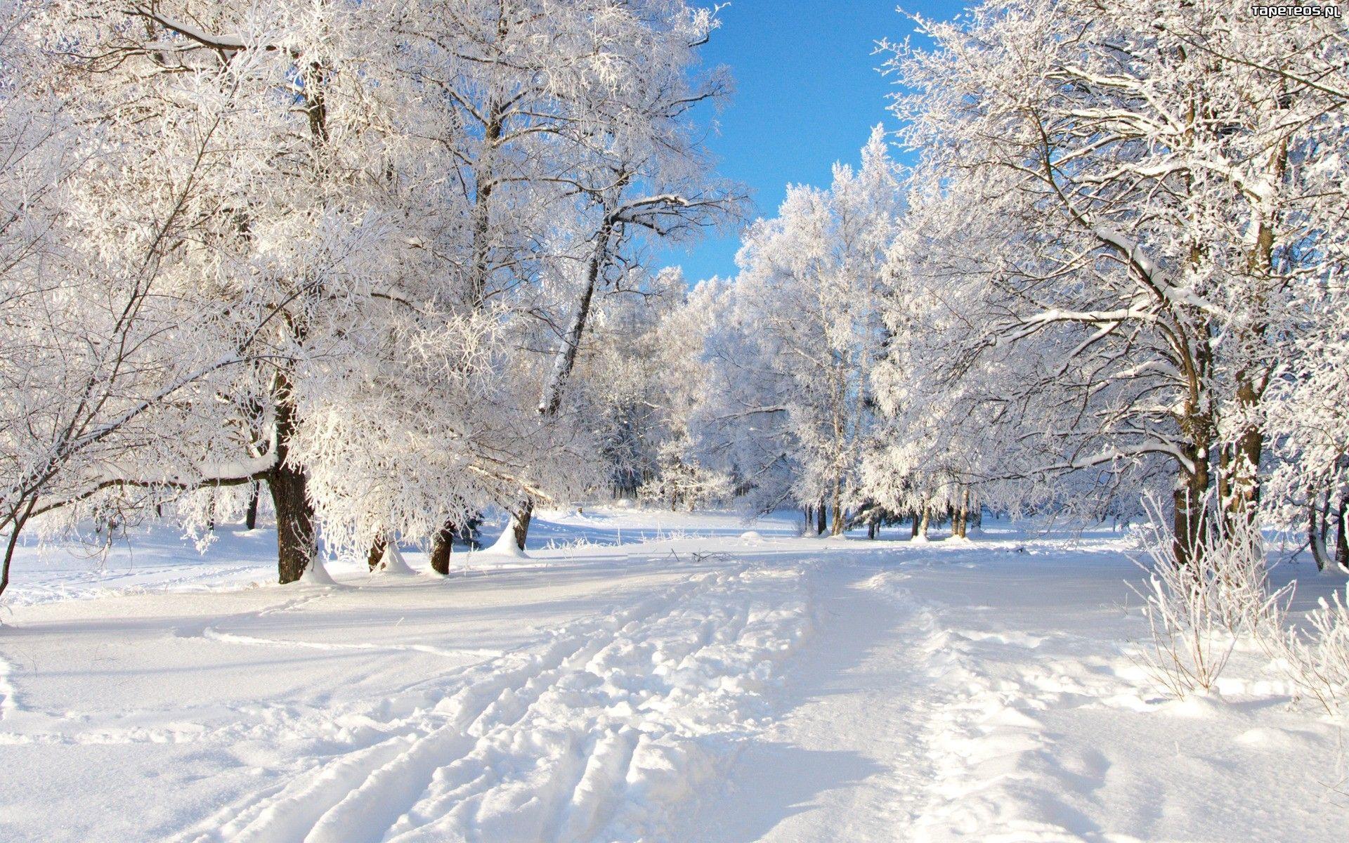 снег ели зима snow ate winter загрузить