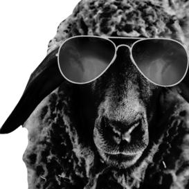 Czarne Owce - cda.pl