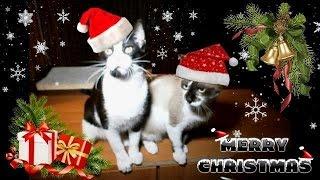 Wesołych  Świąt ! / Merry Christmas !