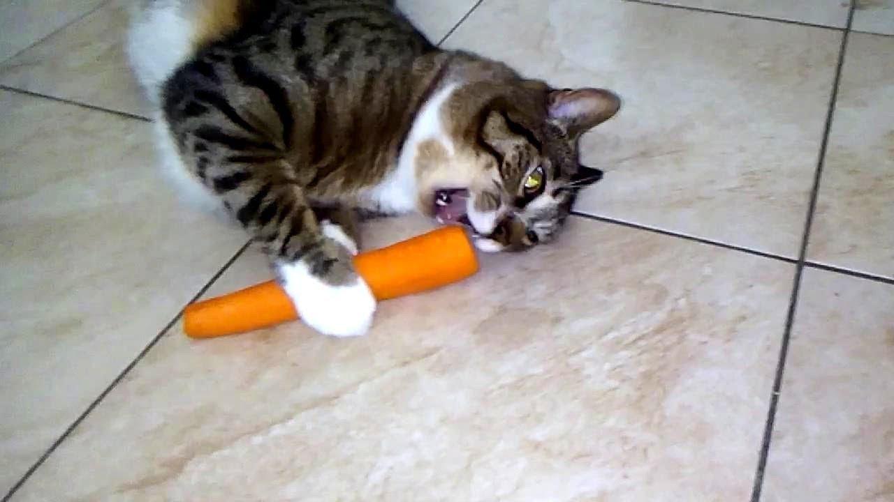 Czy koty jedzą marchewki?
