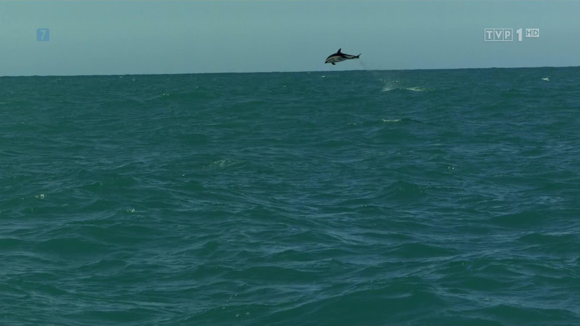 Strzelanina W Nowej Zelandii Film Image: U Wybrzeży Nowej Zelandii [4/6] POLSKI LEKTOR 1080p