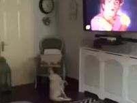 Kiedy Twój pies ma swoją ulubioną piosenkę