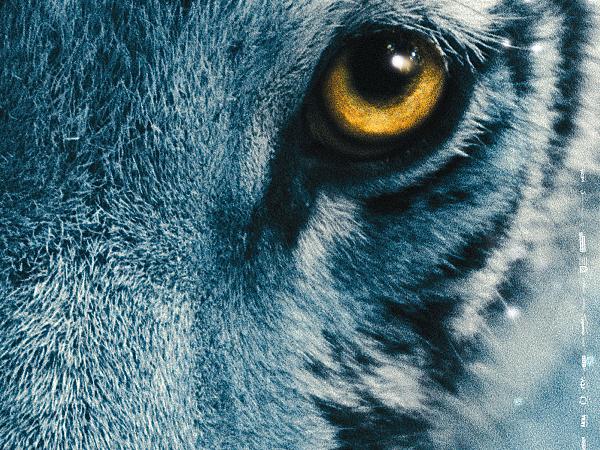 Błękitny tygrys cda