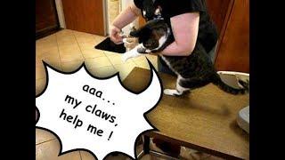 Przycinamy kotu pazurki