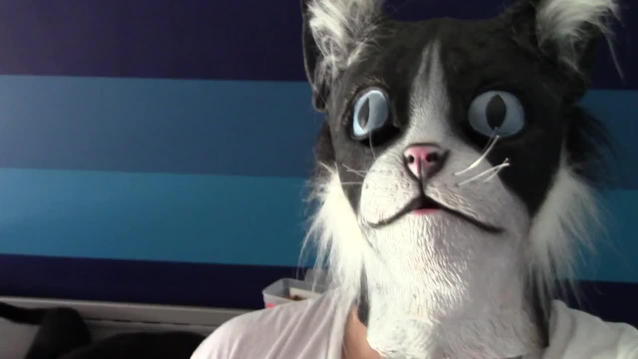 Jak Przestraszyć Skutecznie Koty Wideo W Cdapl