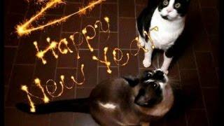 Szczęśliwego kociego Nowego Roku !