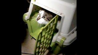 Pakujemy kota do transportera