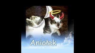 Kot Frędzelek - mój aniołek z różkami