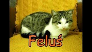 Feluś - mój prezent na imieniny