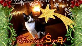 Znowu idą Święta BN, co na to koty?