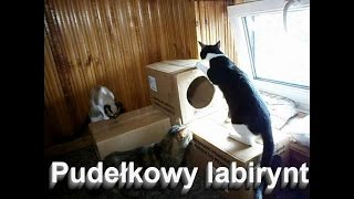 Pudełkowy labirynt dla kotów.