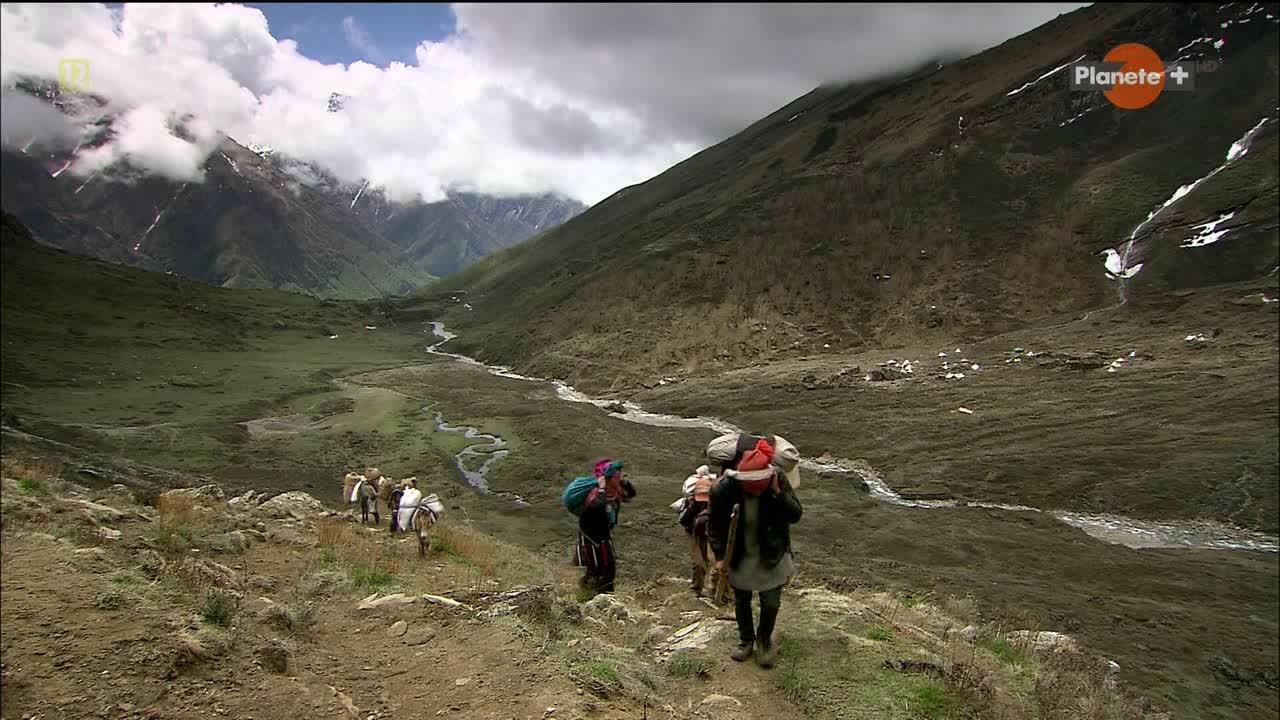 Himalajska Gorączka Złota