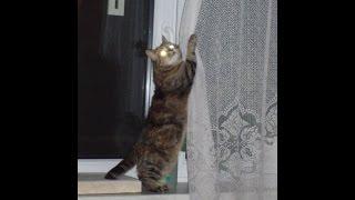 Sposób na nudę mojego kota