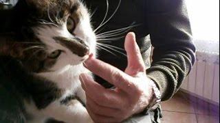 Kot lizaczek