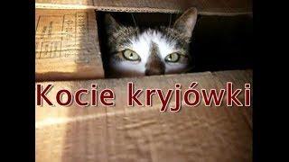 Kocie kryjówki / The cat's hideout