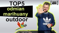 TOP 5 odmian marihuany na outdoor