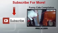 Top 10 Funny Cats Sitting Like Humans Compilation 2014