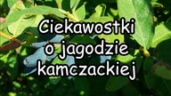 https://www.facebook.com/umyslzielony strona Facebookowa